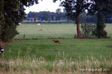 Henry-Wallinga©-Hasselterweg-Rouveen-11