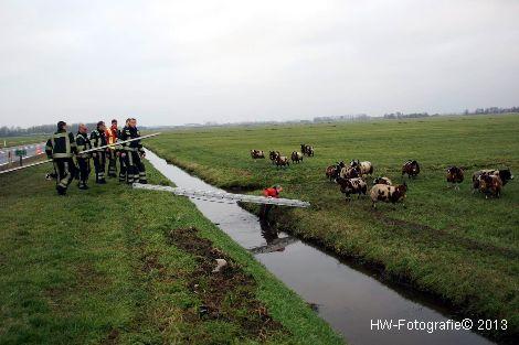 Henry-Wallinga©-Schaap-NieuweWeg-01