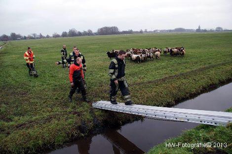 Henry-Wallinga©-Schaap-NieuweWeg-07