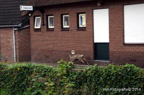 Henry-Wallinga©-Haagjesgracht-Wanneperveen-06
