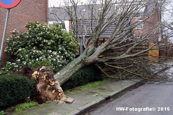 Henry-Wallinga©-Boom-Stormschade-Hasselt-01