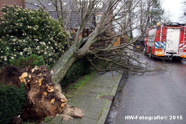 Henry-Wallinga©-Boom-Stormschade-Hasselt-03
