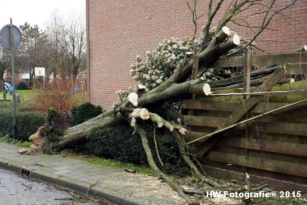 Henry-Wallinga©-Boom-Stormschade-Hasselt-08