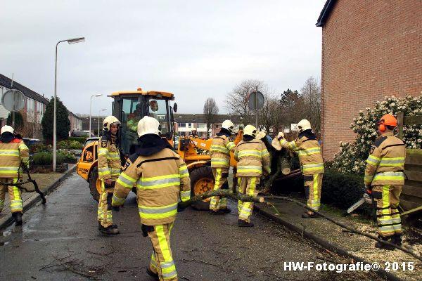 Henry-Wallinga©-Boom-Stormschade-Hasselt-11