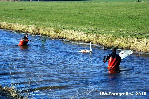 Henry-Wallinga©-Gewonde-Zwaan-Kerkwetering-Mastenbroek-07