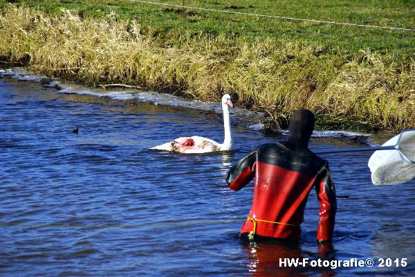 Henry-Wallinga©-Gewonde-Zwaan-Kerkwetering-Mastenbroek-08
