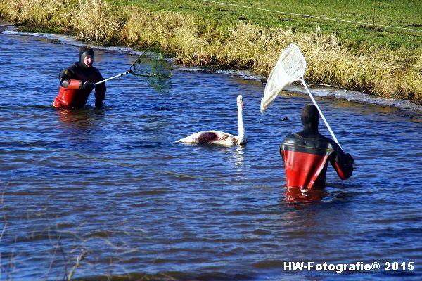 Henry-Wallinga©-Gewonde-Zwaan-Kerkwetering-Mastenbroek-09