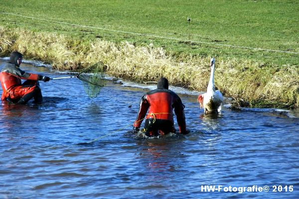 Henry-Wallinga©-Gewonde-Zwaan-Kerkwetering-Mastenbroek-10