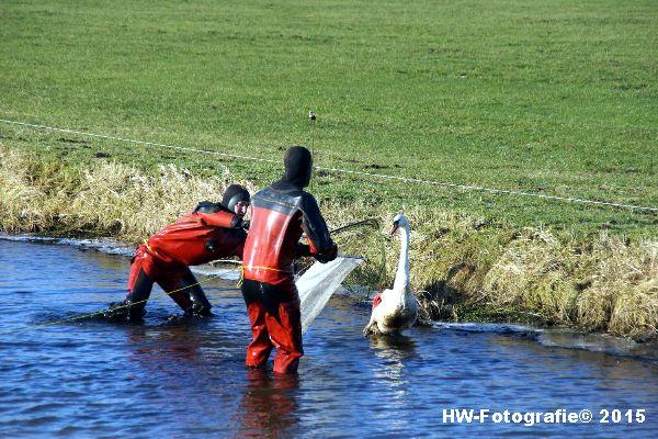 Henry-Wallinga©-Gewonde-Zwaan-Kerkwetering-Mastenbroek-11