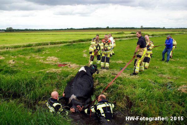 Henry-Wallinga©-Koeien-Sloot-Zwartsluis-19