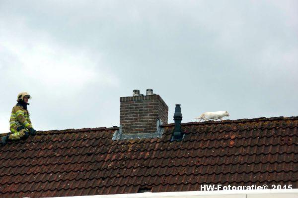 Henry-Wallinga©-Poes-Dak-Genemuiden-05