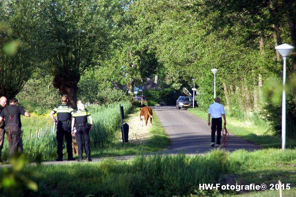 Henry-Wallinga©-Wildwest-Koe-Giethoorn-07