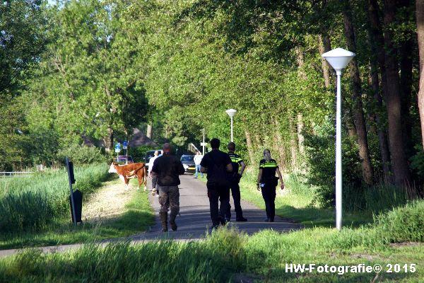 Henry-Wallinga©-Wildwest-Koe-Giethoorn-09
