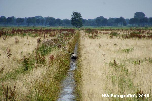 Henry-Wallinga©-Koe-Rechterensweg-Rouveen-01