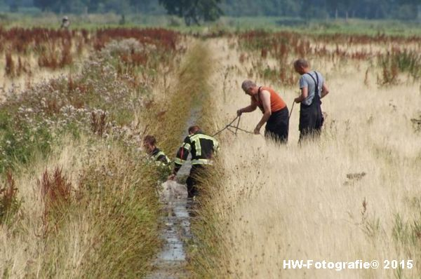 Henry-Wallinga©-Koe-Rechterensweg-Rouveen-10
