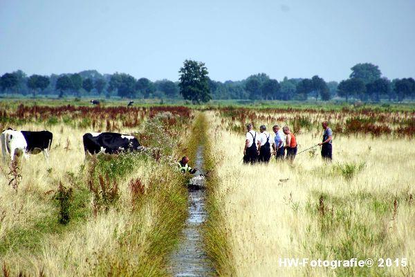 Henry-Wallinga©-Koe-Rechterensweg-Rouveen-12
