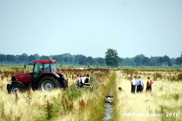 Henry-Wallinga©-Koe-Rechterensweg-Rouveen-14