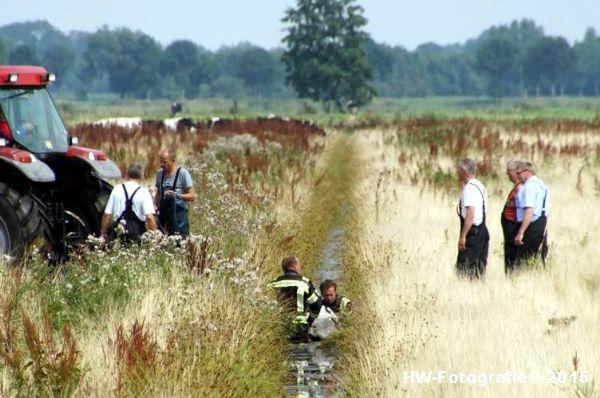 Henry-Wallinga©-Koe-Rechterensweg-Rouveen-15