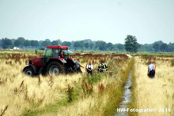 Henry-Wallinga©-Koe-Rechterensweg-Rouveen-16