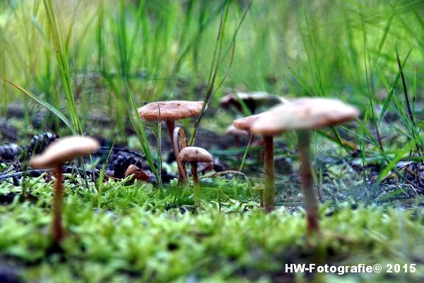 Henry-Wallinga©-Natuur-Paddestoelen-02