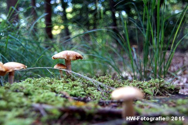 Henry-Wallinga©-Natuur-Paddestoelen-20
