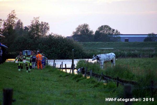 Henry-Wallinga©-Koe-Ringweg-Genemuiden-01