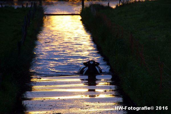 Henry-Wallinga©-Koe-Ringweg-Genemuiden-02