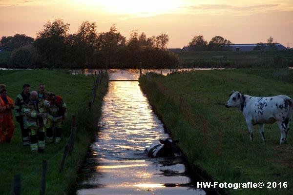 Henry-Wallinga©-Koe-Ringweg-Genemuiden-03