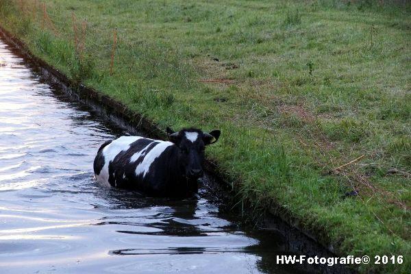 Henry-Wallinga©-Koe-Ringweg-Genemuiden-05