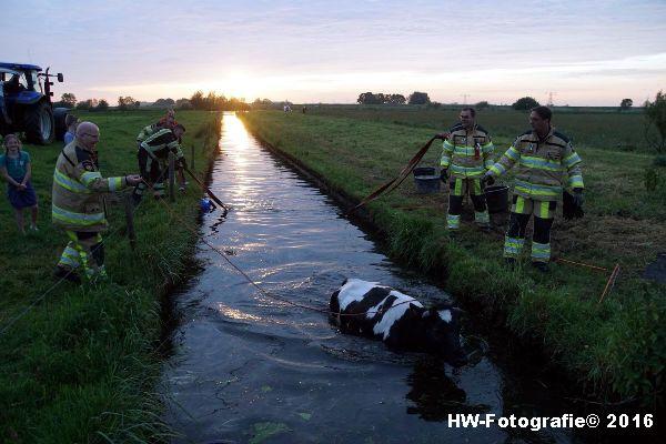 Henry-Wallinga©-Koe-Ringweg-Genemuiden-07