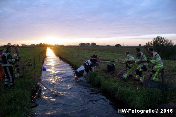 Henry-Wallinga©-Koe-Ringweg-Genemuiden-08