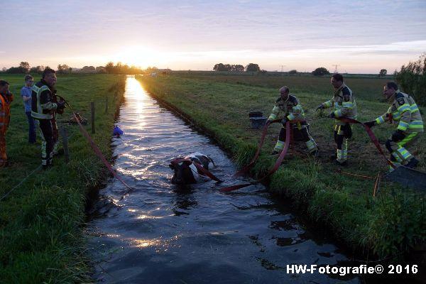 Henry-Wallinga©-Koe-Ringweg-Genemuiden-09