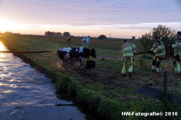 Henry-Wallinga©-Koe-Ringweg-Genemuiden-13