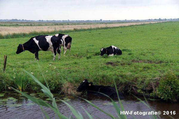 Henry-Wallinga©-Koe-Rechterensweg-2-Rouveen-01