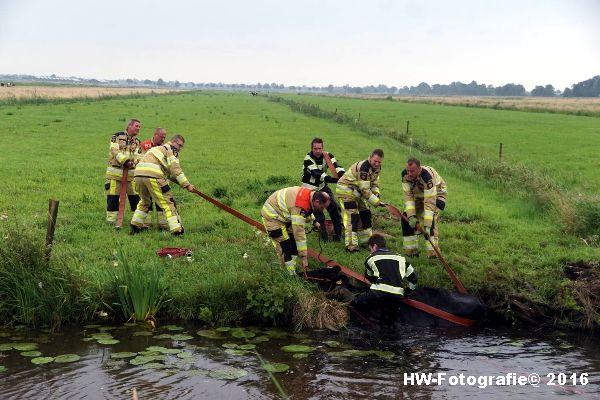Henry-Wallinga©-Koe-Rechterensweg-2-Rouveen-05