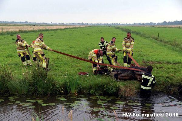 Henry-Wallinga©-Koe-Rechterensweg-2-Rouveen-07