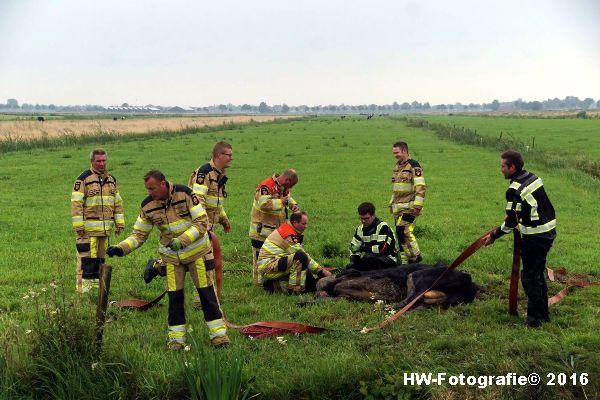 Henry-Wallinga©-Koe-Rechterensweg-2-Rouveen-09