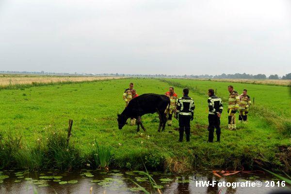 Henry-Wallinga©-Koe-Rechterensweg-2-Rouveen-12