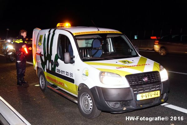 henry-wallinga-ongeval-hond-a28-rouveen-04