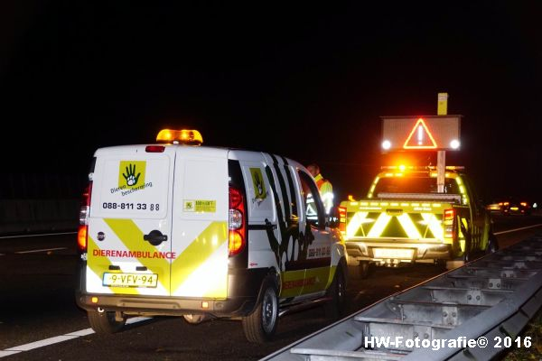 henry-wallinga-ongeval-hond-a28-rouveen-06
