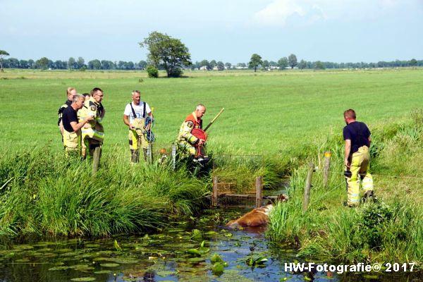 Henry-Wallinga©-Stier-Rechterensweg-Rouveen-02
