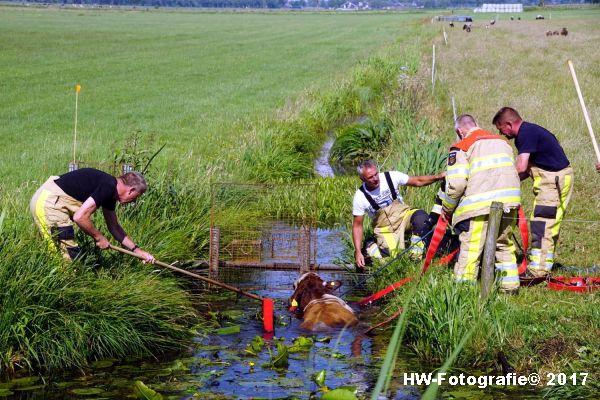 Henry-Wallinga©-Stier-Rechterensweg-Rouveen-04