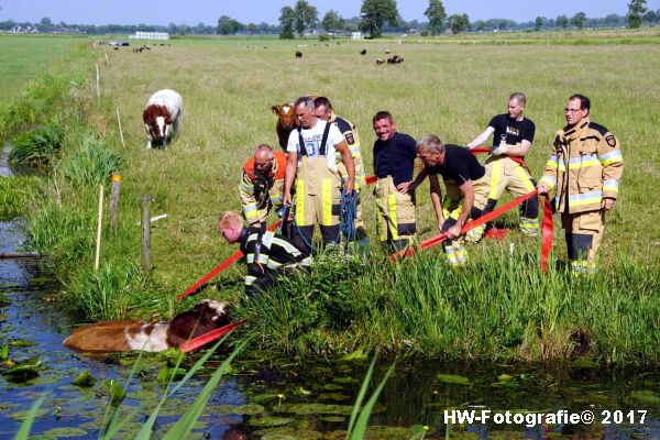 Henry-Wallinga©-Stier-Rechterensweg-Rouveen-07