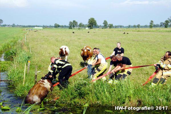 Henry-Wallinga©-Stier-Rechterensweg-Rouveen-08