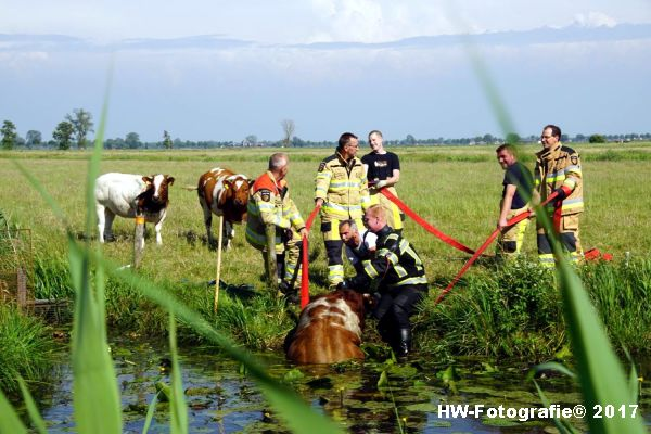 Henry-Wallinga©-Stier-Rechterensweg-Rouveen-10