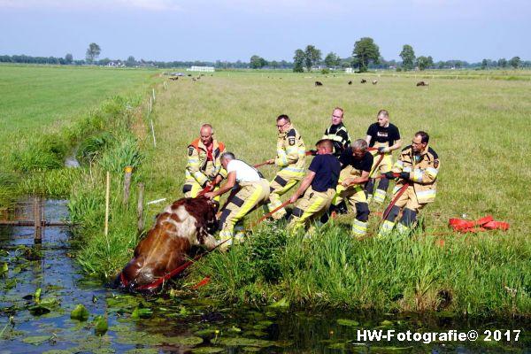 Henry-Wallinga©-Stier-Rechterensweg-Rouveen-11