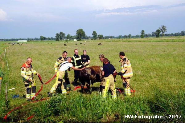 Henry-Wallinga©-Stier-Rechterensweg-Rouveen-12